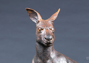 kangourou-1.jpg