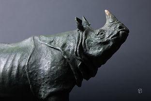 rhinoindien-1.jpg