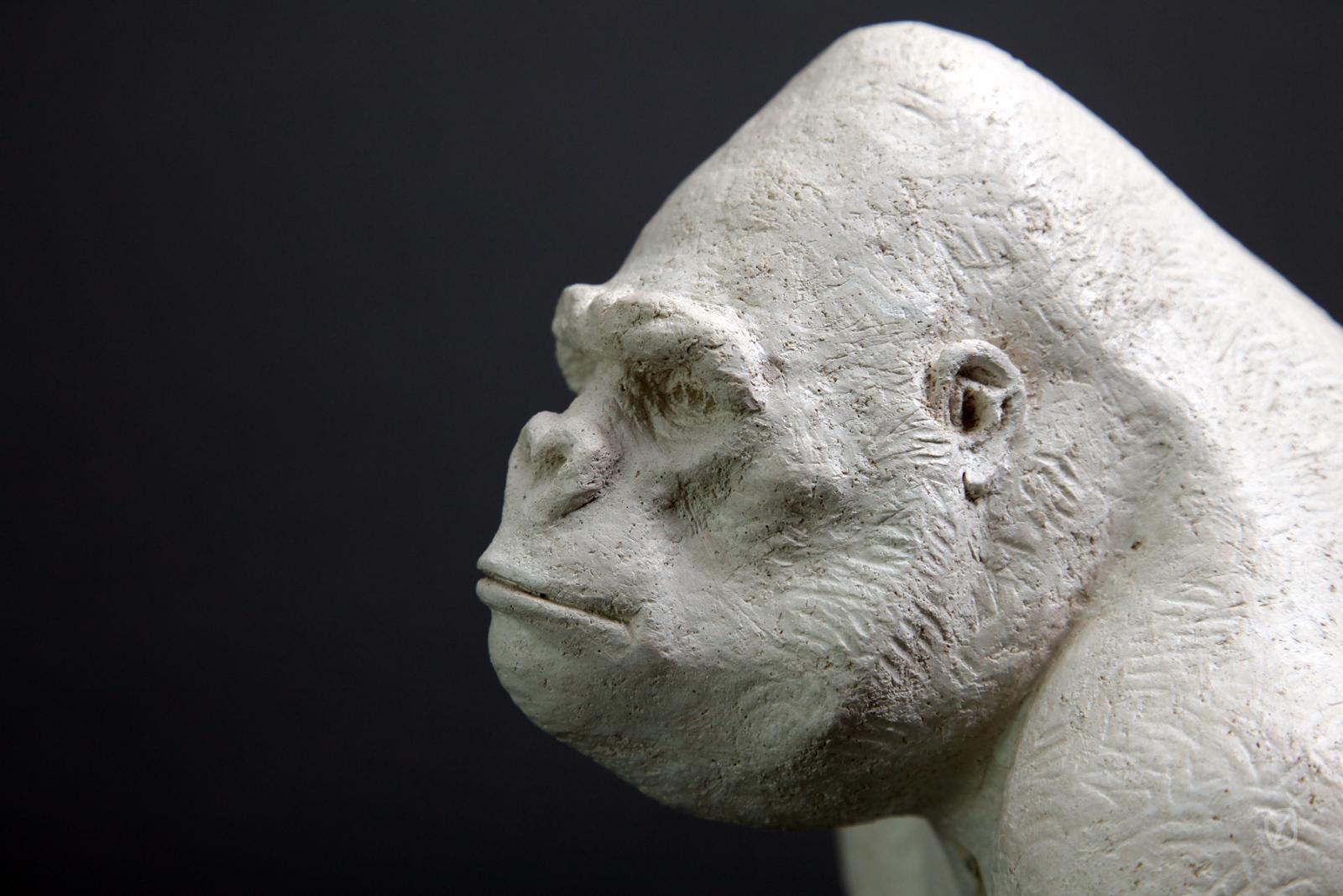 le gorille blanc
