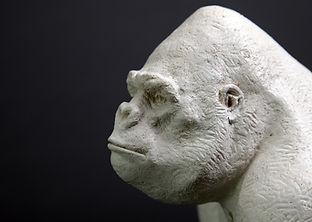 gorille-blanc-3.jpg