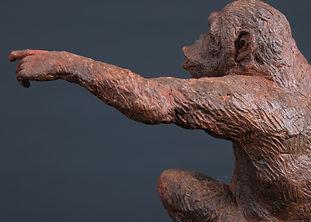 chimp-brastendu-2.jpg