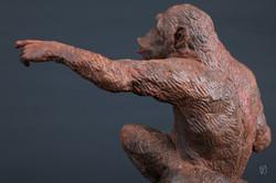 chimpanzé au bras tendu