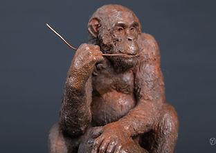chimp-brindille-2.jpg