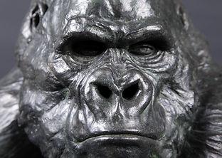 gorille-1.jpg