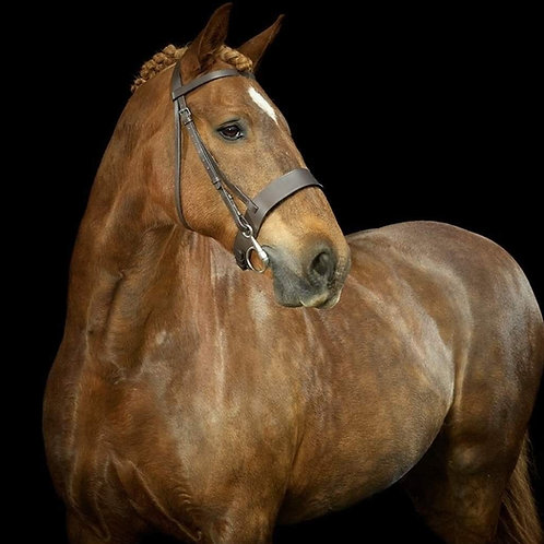 Gallop Brown leather Hunter Bridle
