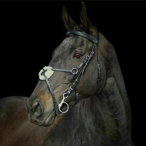 Gallop Grackle Bridle