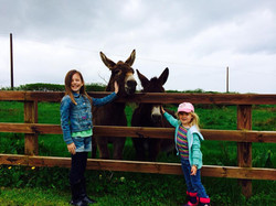 Say hello to our resident Donkeys
