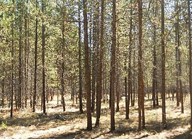 Healthy Forests for Wildlife and S.bmp