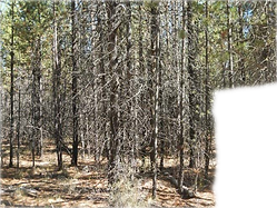 Healthy%20Forests%20for%20Wildlife%20and
