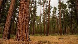 Forest Health Planning