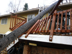 Wind Damage Before