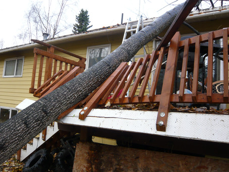 What To Look For After a Wind Storm.