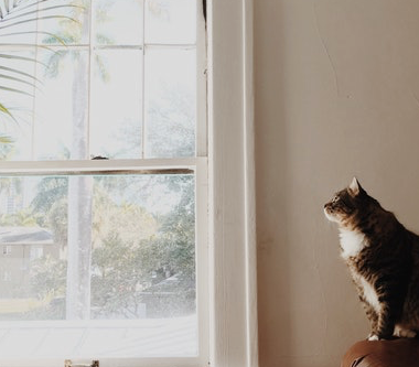 How Your Windows Can Save You Money