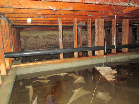 How to Fight Mold in a Flooded House
