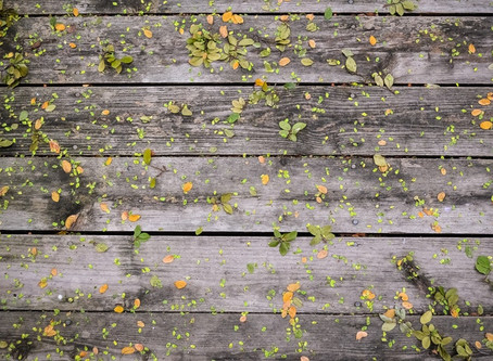 How to Inspect Your Home for Wood Rot