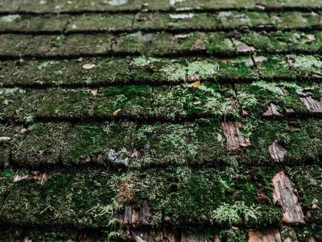 Is It Time For Moss Removal?