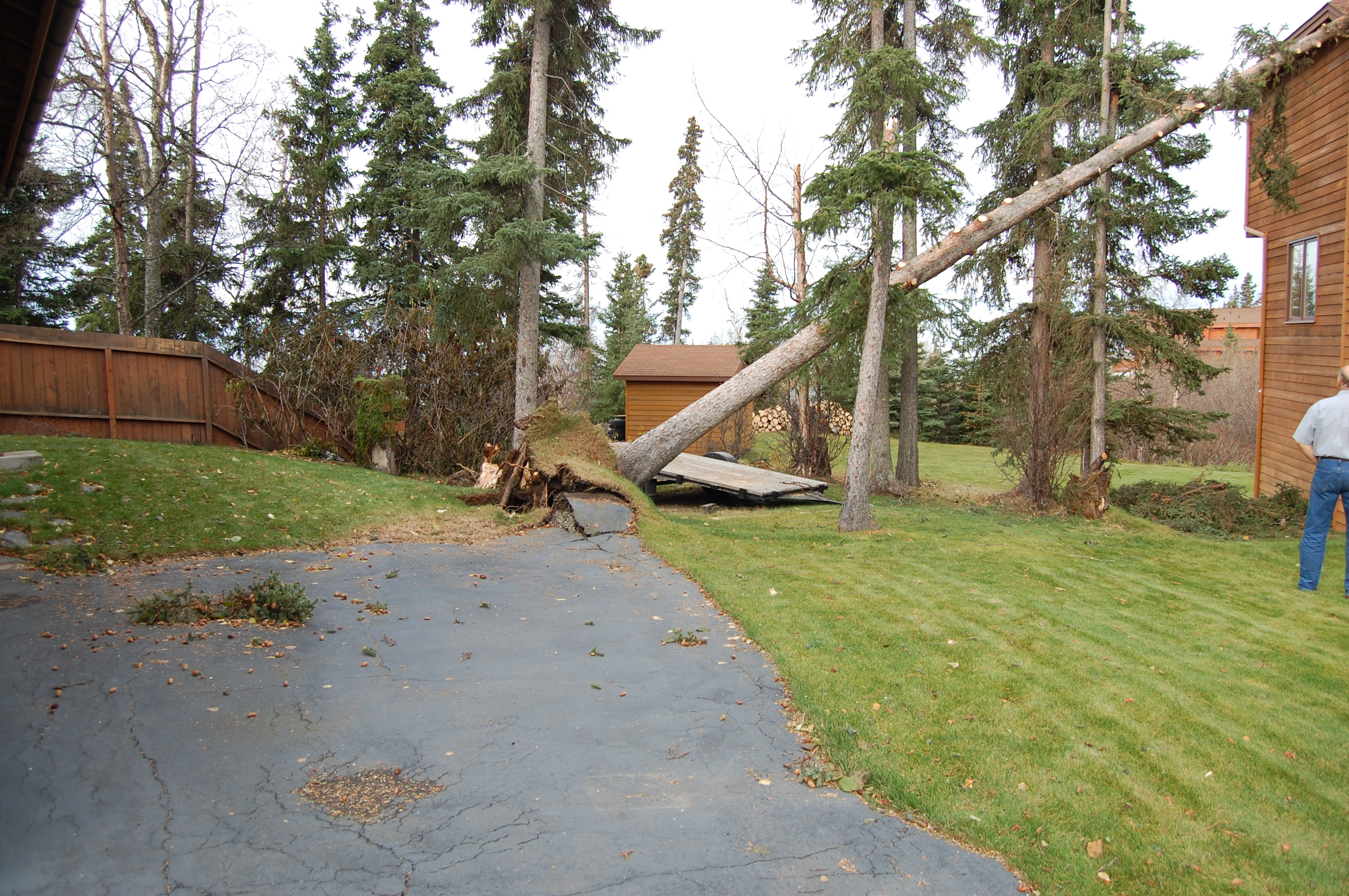 Wind Damage Before