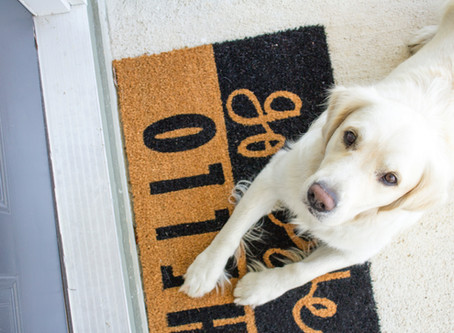 4 Fun Home Upgrades for Dog Lovers