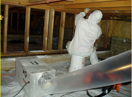 What to Expect from a Mold Remediation Specialist