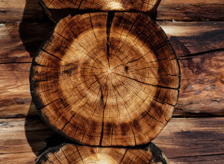 The Cause of Wood Rot