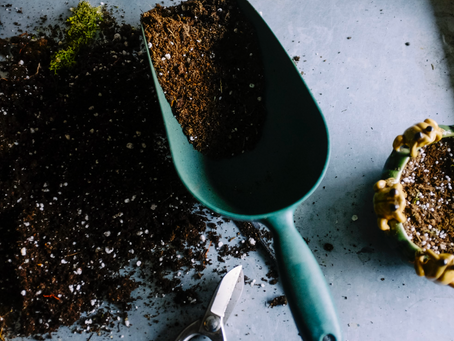 Prepping Your Yard and Garden