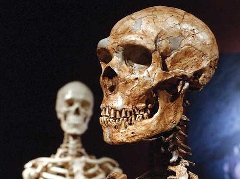 face neanderthal.jpg