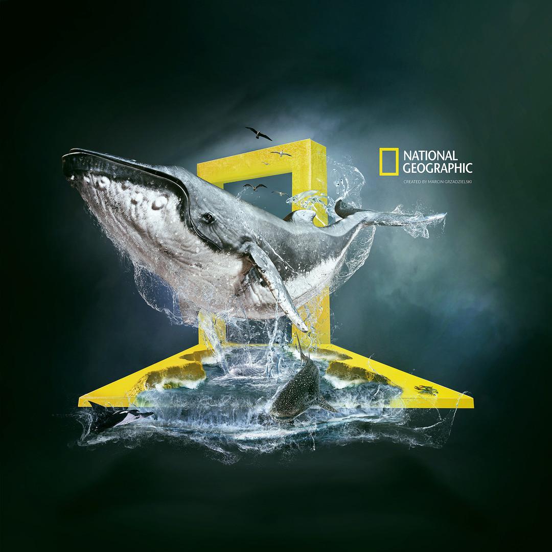 wieloryb.jpg