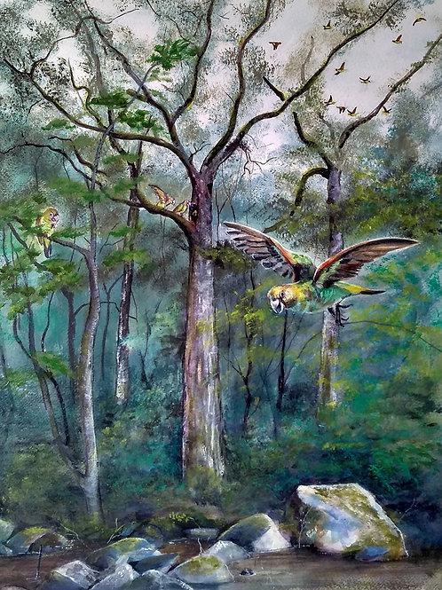 Papagaio-do-cabo - Artista Plástica Birgitte Tummler