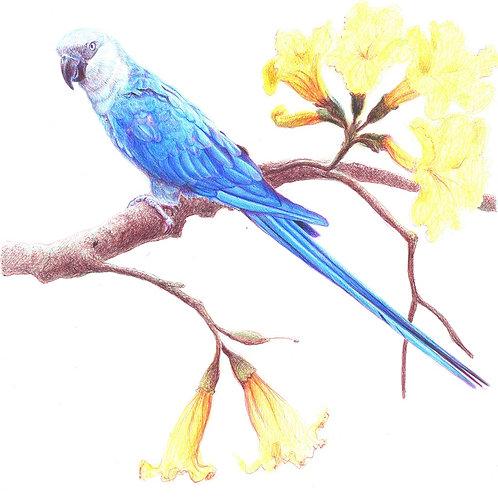 Ararinha-azul - Artista Plástica BirgitteTummler