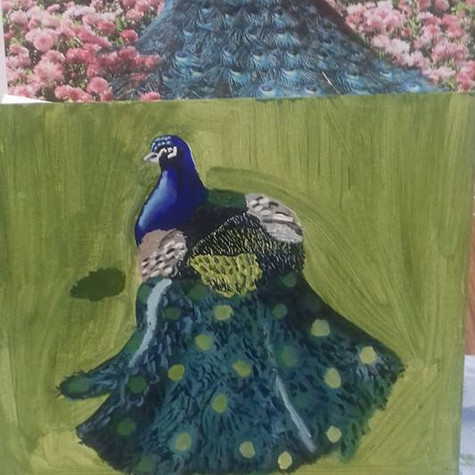 Peacock by Jade Hurdle