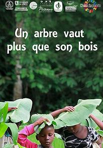 film un arbre vaut plus que son bois cycle de l'eau déforetation sécheresse