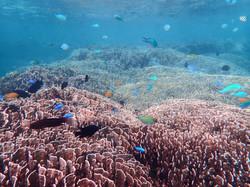 沖縄県石垣島 白保の海