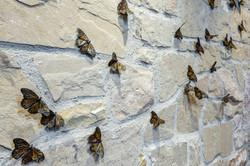 Butterflies_WEBRES