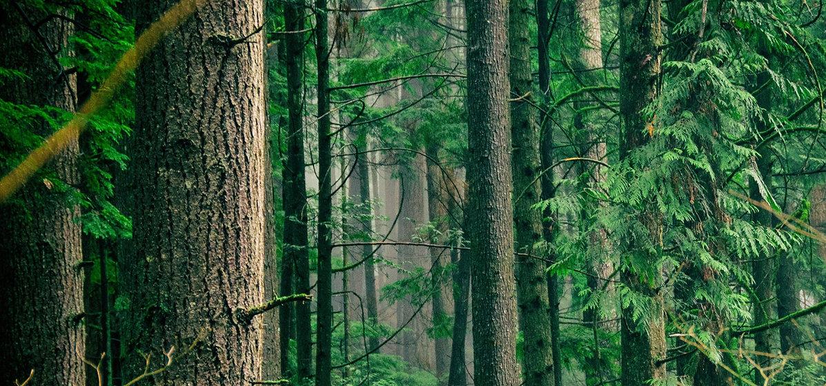 modus-forest.jpg