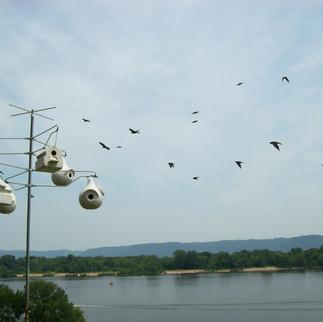 bird houses birds.jpg
