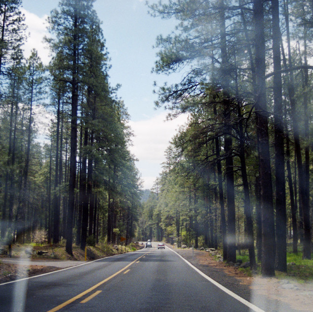 WEB-PRINTtrees-through-windshieldscan007
