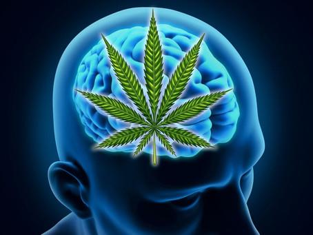 PTSD and Cannabis