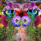 Gryphon Dor Visuals2.jpg
