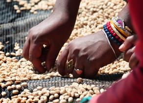 Costa Rican Tarrazu Coffee Beans