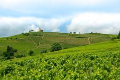 Le Beaujolais officiellement labellisé Géoparc mondial de l'Unesco