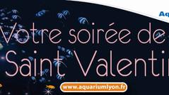 Une Saint Valentin à l'Aquarium ...