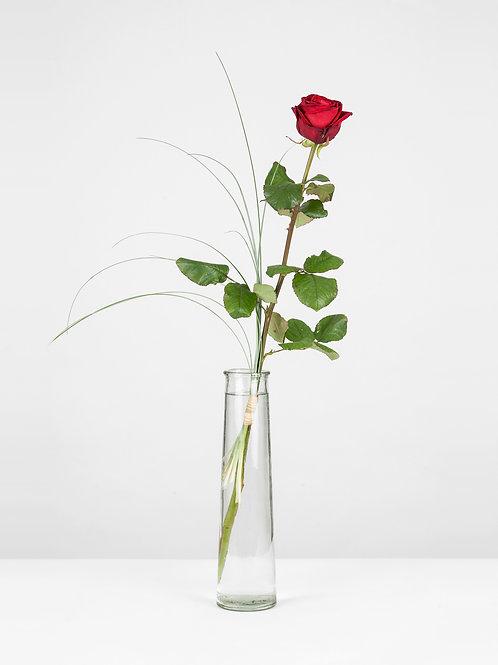 Rose rouge à la pièce