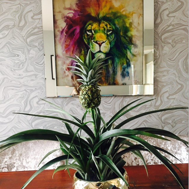 pineapple plant, home decor, health benefits of pineapple
