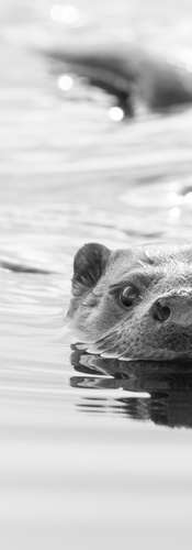 Otter Inquisition