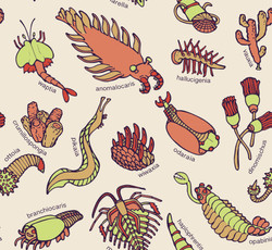 Cambrian Critters