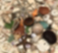 Beachcombing & Shelling.jpg