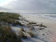 Beaches Alive.jpg