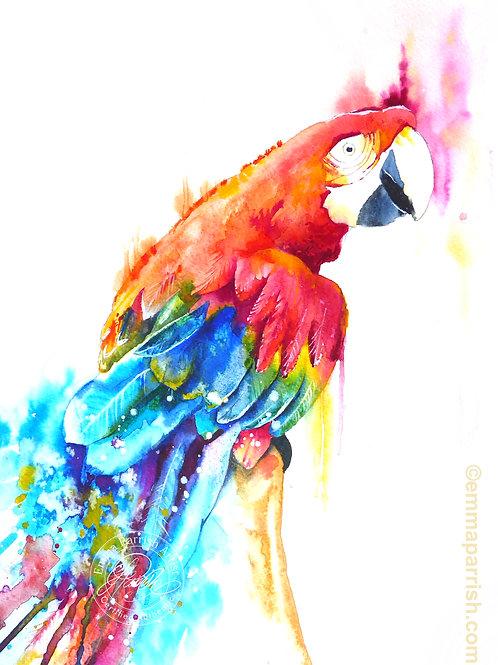 Mojo The Parrot