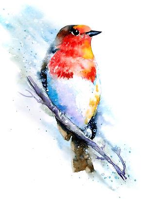 B03 Robin RGB.jpg
