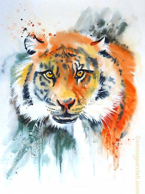 "Siberian Tiger ""Khan"""